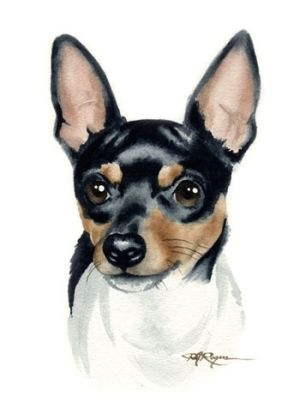 TOY FOX TERRIER Painting Dog Art ACEO Print Signed DJR.