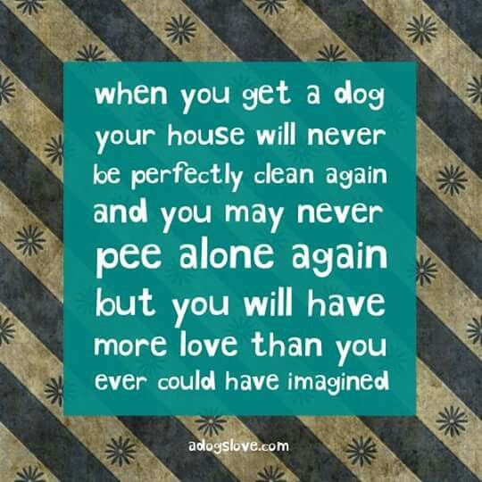 So true!! My Memus Is the biggest Momma's Boy.... he doesn't let me out of his sight. If I go in the bathroom he lays on the floor between me & the door to protect me. He's Momma's sweetest boy- his tag even says so. <3 and I love it!
