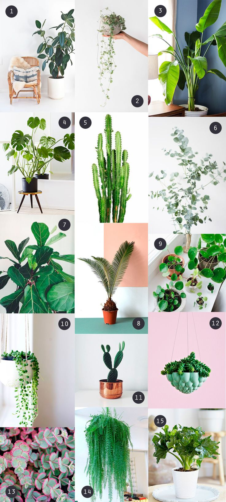 Les 25 meilleures id es de la cat gorie plante d 39 int rieur for Plante interieur photo