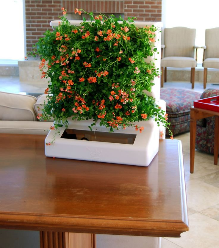 Indoor Home Vertical Garden Design Ideas Aria Tabletop Evo Organic Living  Room
