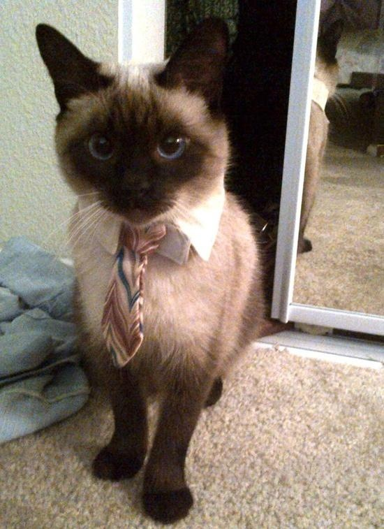 The good news:  My cat got a job.                      The bad news: He makes more than I do.