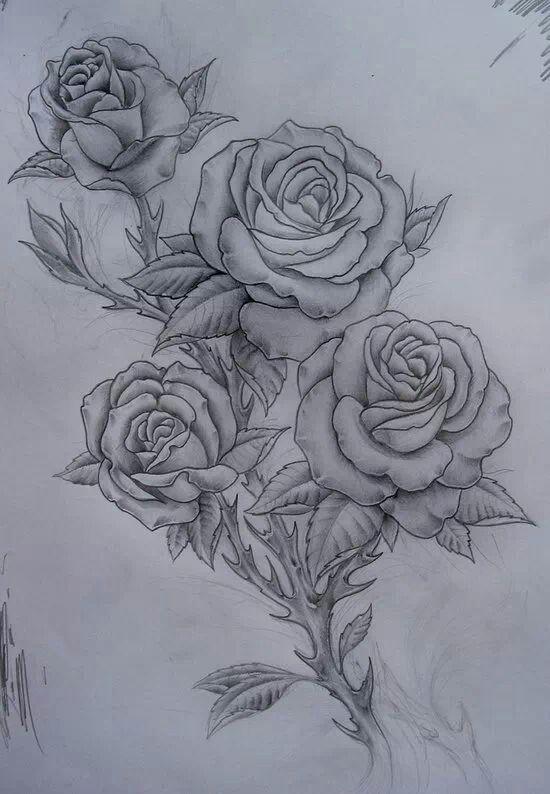 Rosas y flores en general.