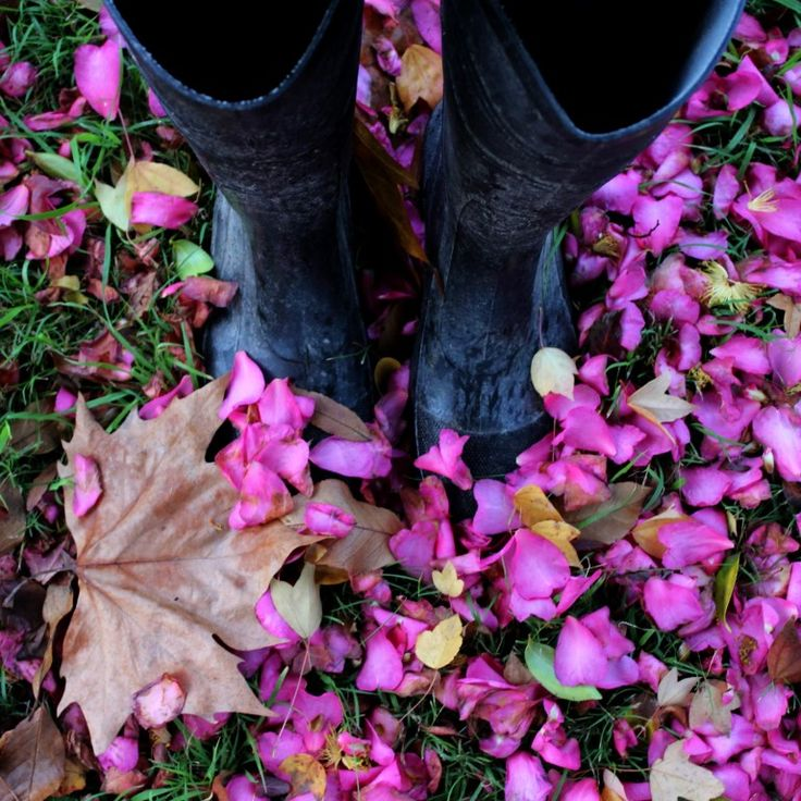 Autumn leaves and pink blossoms made me feel positively stylish in my old black gum boots this morning.