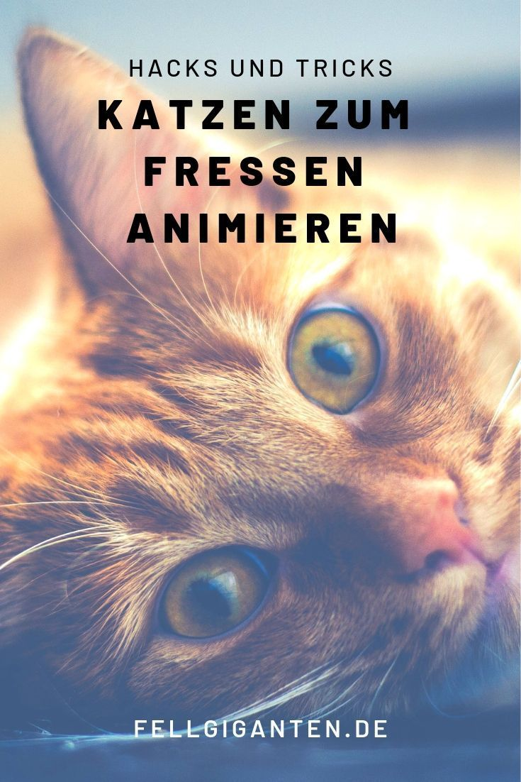 Katzen Katze Katzenfutter Fressen Katzenkrankheiten Katzekrank