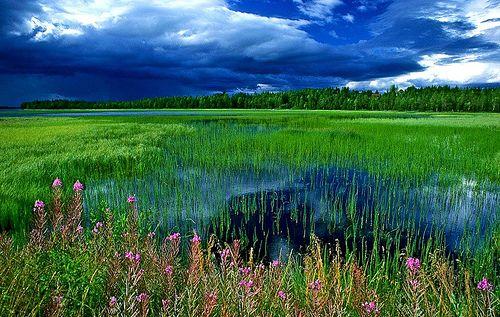 Finnish Lake