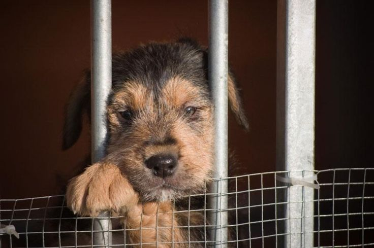 Facts About Puppy Mills...Puppy looking out from cage
