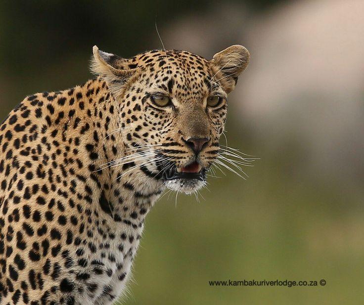 Trip to Kruger