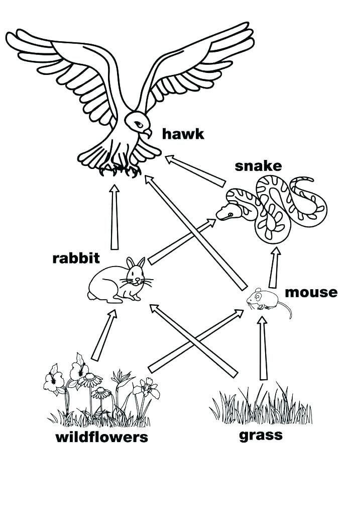Colouring Pages Of Food Chain