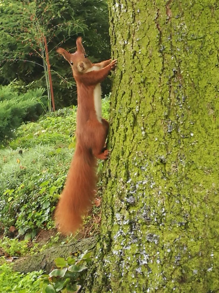 Moja wiewiórka,w moim ogrodzie.Zdjęcie mojego autorstwa. / My Squirrel,in my garden.Picture taken by me. :-)