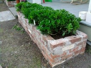 Brick planters + hedge                                                                                                                                                                                 More