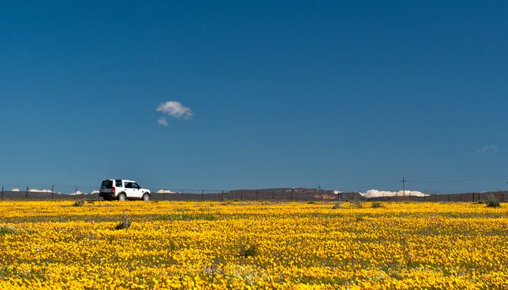 The spring wildflower show along the West Coast and into Namaqualand is something every South African should see.