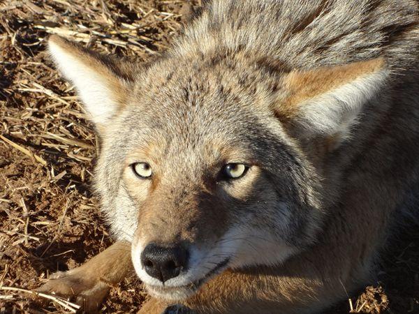 Best 25 kansas hunting ideas on pinterest where is for Kansas fish and wildlife