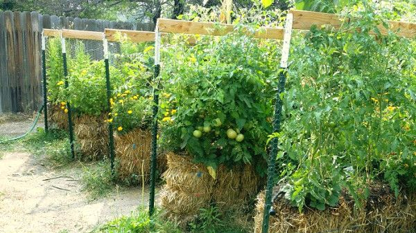 Effortless Food Production With Hay Bale Gardening - Using hay bales as a simple and 'no work' gardening method is a relatively new idea. Here we have an article in the News Prepper which, along with a video, gives us an idea into this method of food production. It seems that hay bale gardening requires little or no work and a minimum amount …