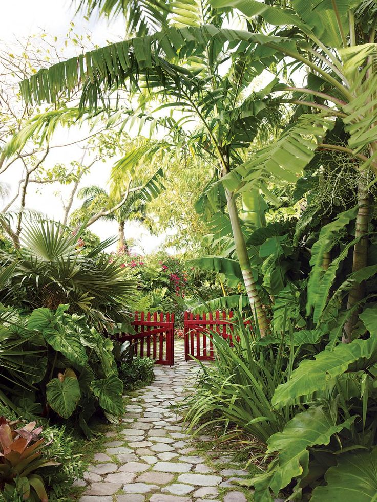 lovely stone path through a tranquil tropical garden. Raymond Jungles design of a caribbean garden.