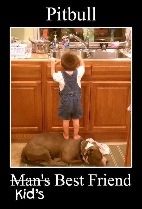 Kid's Best Friend.: Dogs, Best Friends, Step Stools, Bestfriends, Pitbull, Pit Bull, Kids, Nanny Dog, Animal