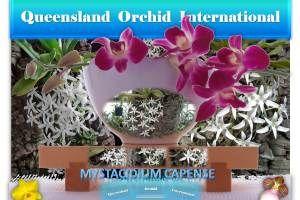 Mystacidium capense: A Dainty Orchid from South Africa 🌍✾ https://queenslandorchid.wordpress.com/2016/08/28/mystacidium-capense-a-dainty-orchid-from-south-africa/