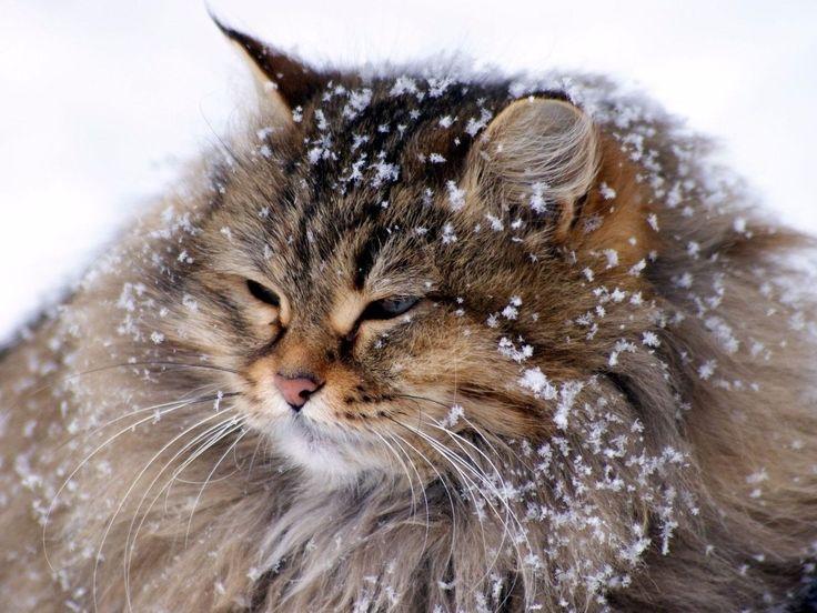#Зима# - это когда идешь по улице, а снежинки лезут к тебе целоваться, и приходишь домой весь зацелованный....