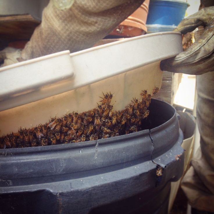How to lure a swarm of bees | Beekeeping Like A Girl