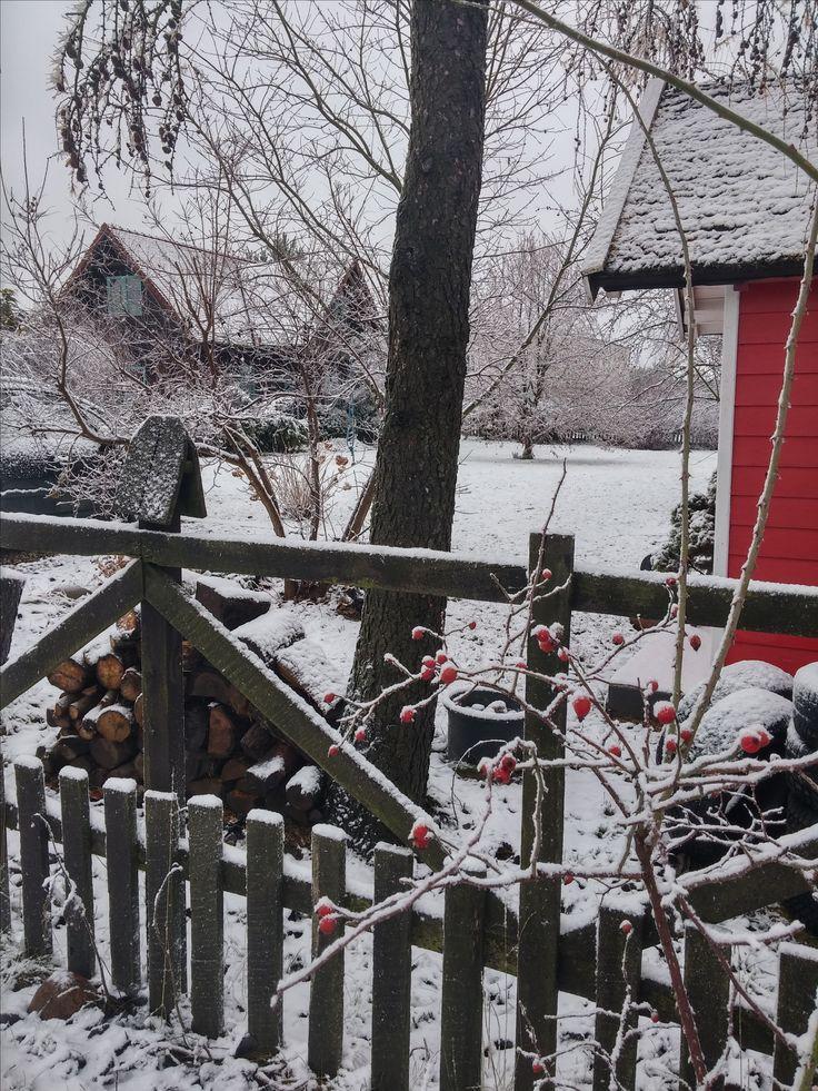 Zima w Kosowie. Właśnie dla takich widoków zostawiamy na zimę owoce i kwiatostany.