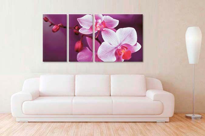 Orhidee pe mov 6521