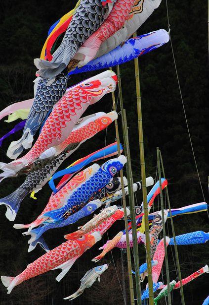 Japanese carp streamer, Koinobori こいのぼり celebrate boys on May 5.  Tango no sekku.