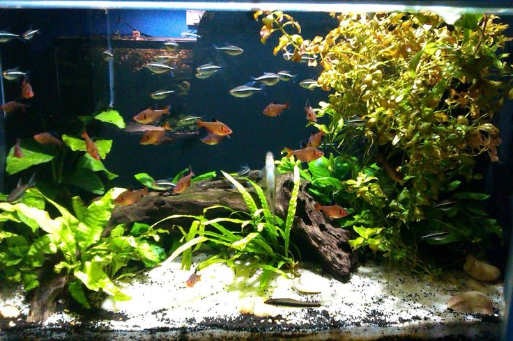 Decorating a tank using aquarium decorations that you buy for Order aquarium fish online