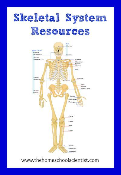 Human anatomy resources