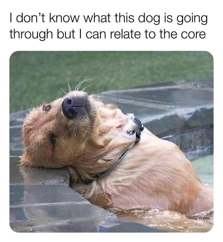 Rebarkable Doggo Memes 35 Dog Memes In 2021 Funny Animals Dog Memes Animals