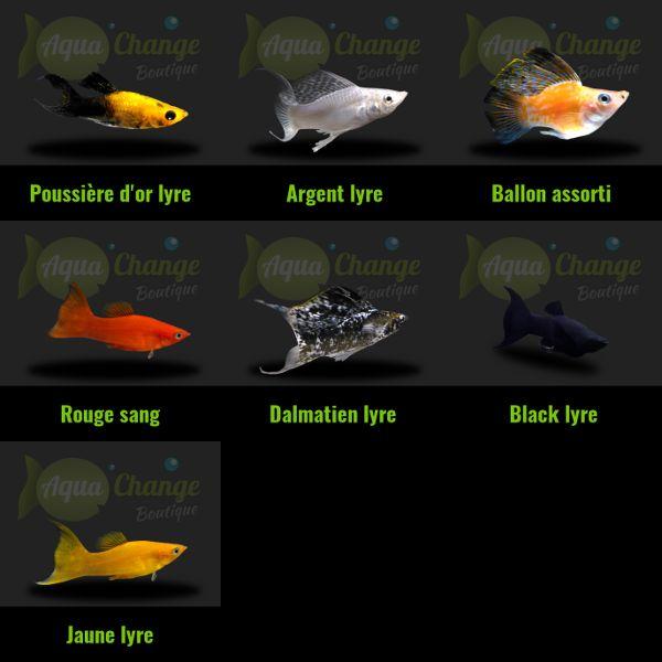 Variétés de Molly http://www.aquachange.fr/Boutique/poissons-aquarium/15-molly-poecilia-sphenops.html                                                                                                                                                                                 More