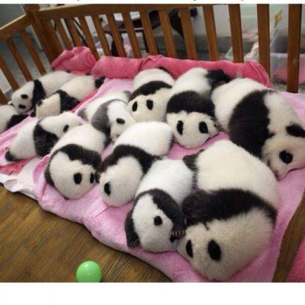 【画像】中国で大量のパンダが製造される : 暇人\(^o^)/速報