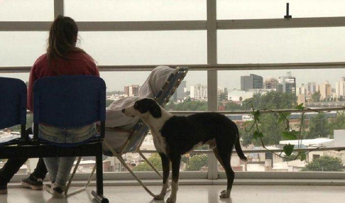 Conmovedor: un perro busca a su dueño fallecido en un hospital | Córdoba