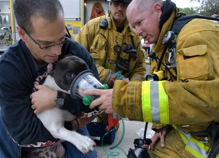 Held by his owner, Clyde, a pitbull, is given oxygen by Garden Grove Fire Department Captain Jeff Wilkins.   Shared by LION