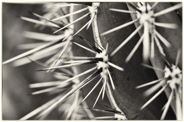 Black and white cactus by AuroraMinna on Etsy