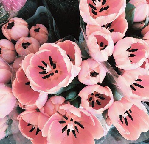 15 Most Beautiful Black Flowers: 17 Best Ideas About Tulip On Pinterest