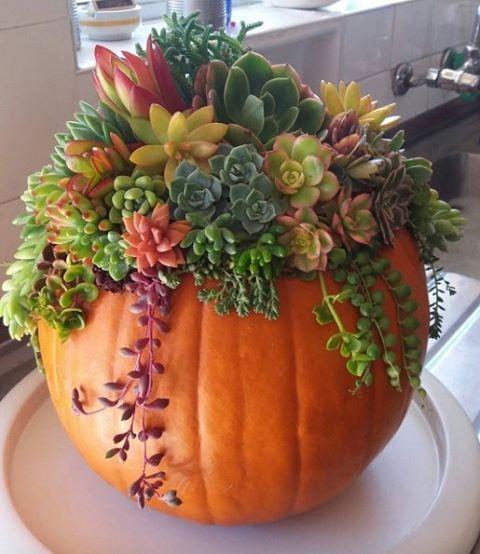 Stuff a pumpkin with succulents.