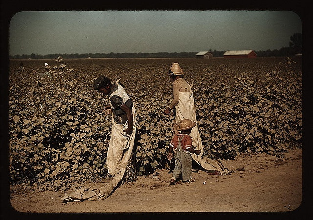 A hard life...Day laborers picking cotton, near Clarksdale, Miss. 1939 November