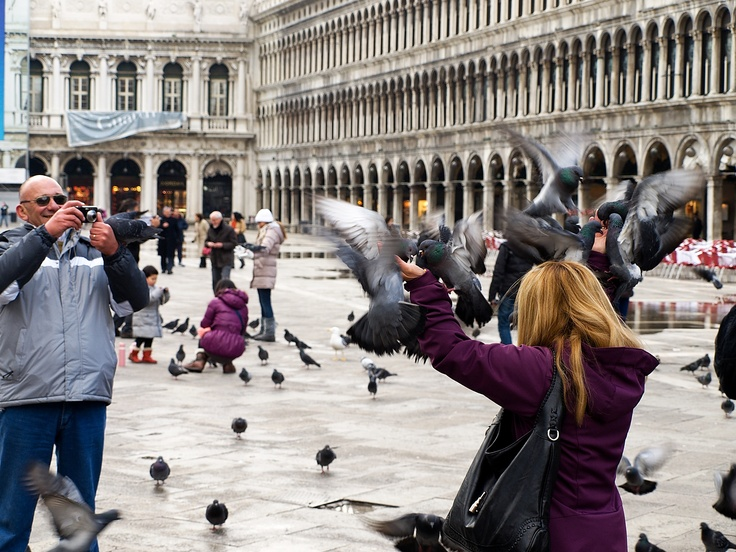 zase holubi