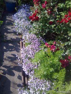 Компаньоны для роз: Группа Цветы и флористика