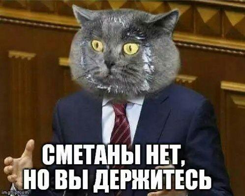 Про котиков (политическое)