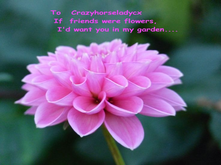 Just for you crazyhorseladycx....    your a very special bloom in the garden of life..