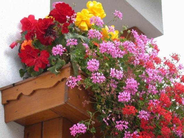 oltre 25 fantastiche idee su fiori da balcone su pinterest ... - Fiori Da Balcone