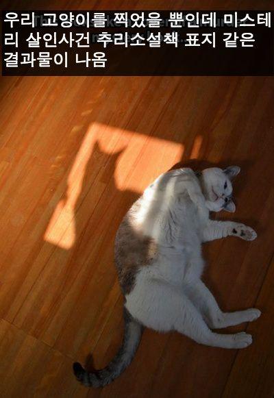 왜긴 왜야 내가 고양이니까지   인스티즈