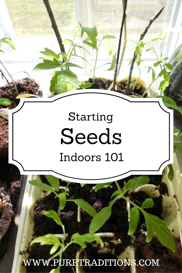 Starting a vegetable garden indoors seven key tips for for Starting a vegetable garden