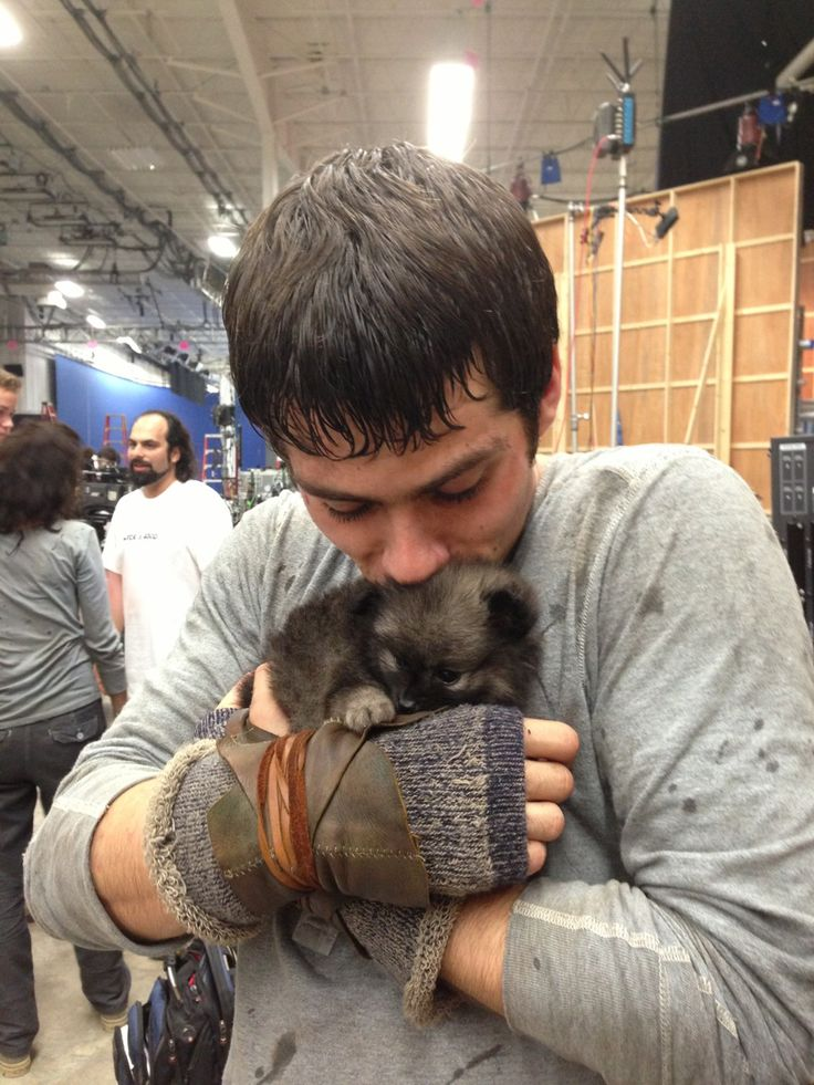 Dylan O'Brien from the Maze Runner. Look at him with that puppy! ( Omg can I take him home? ... I'm talking about Dylan.) :D