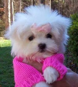 Pet Insurance: Cheap pet insurance for dogs