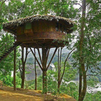 Cool tree house design