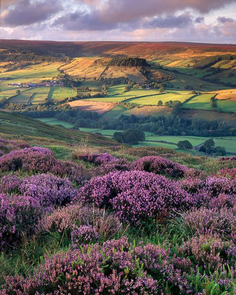 ~~Evening light, Above Rosedale ~ North York Moors, England by Ross Brown~~