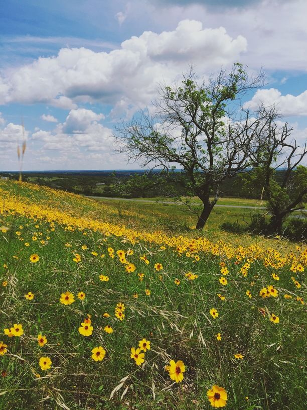 West Texas Wildflowers, Gillespie County, Texas — by Sarah Quiara. At a picnic area off I-10.
