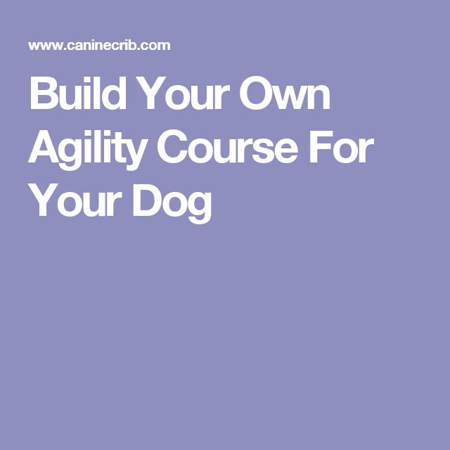 Build Your Own Agility Course For Your Dog