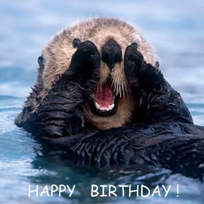 photo sea-otter-1.jpg